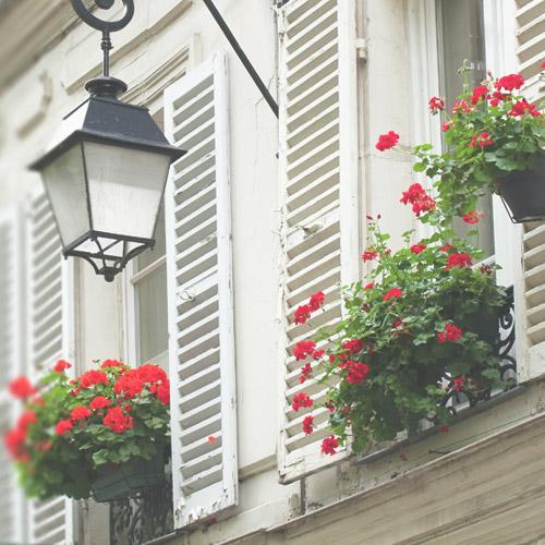 Fleur en Ville